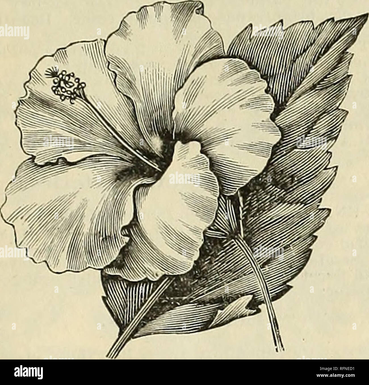 Illustrated Catalogue Of Plants Bulbs Trees Etc Nurseries