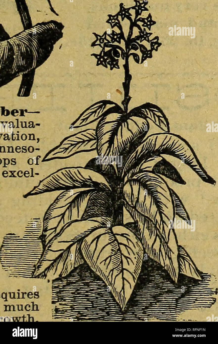 Annual catalogue of celebrated trademark seeds and other specialties