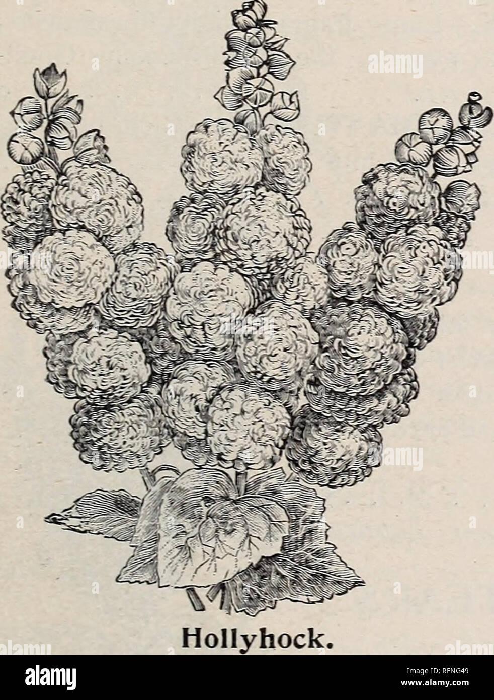 10 Magnolia Flower Seeds Mixed Fragrant Tree Japan Perennial Ornamental Plant