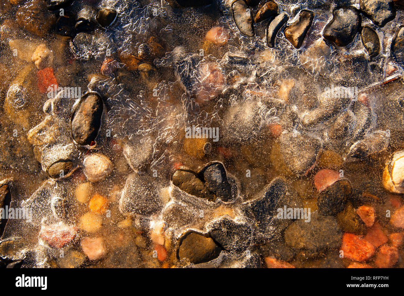 Pebbles in a frozen pond, Cradle Mountain, Australia - Stock Image