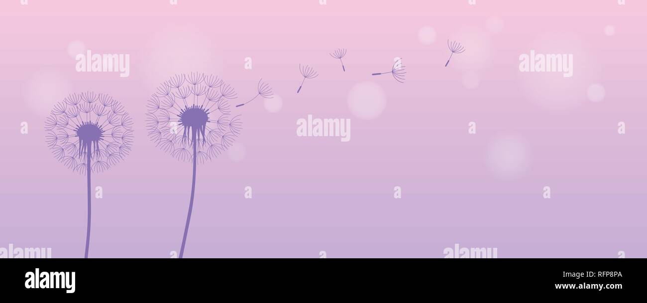 dandelion silhouette with flying seeds on bright purple background vector illustration EPS10 - Stock Vector