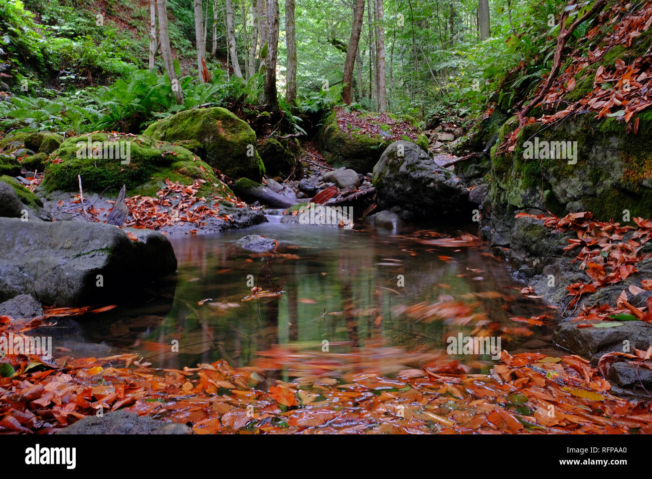 Eastern Black Sea region attracts attention with its natural beauties.  creeks in autumn creates beautiful images. Stock Photo