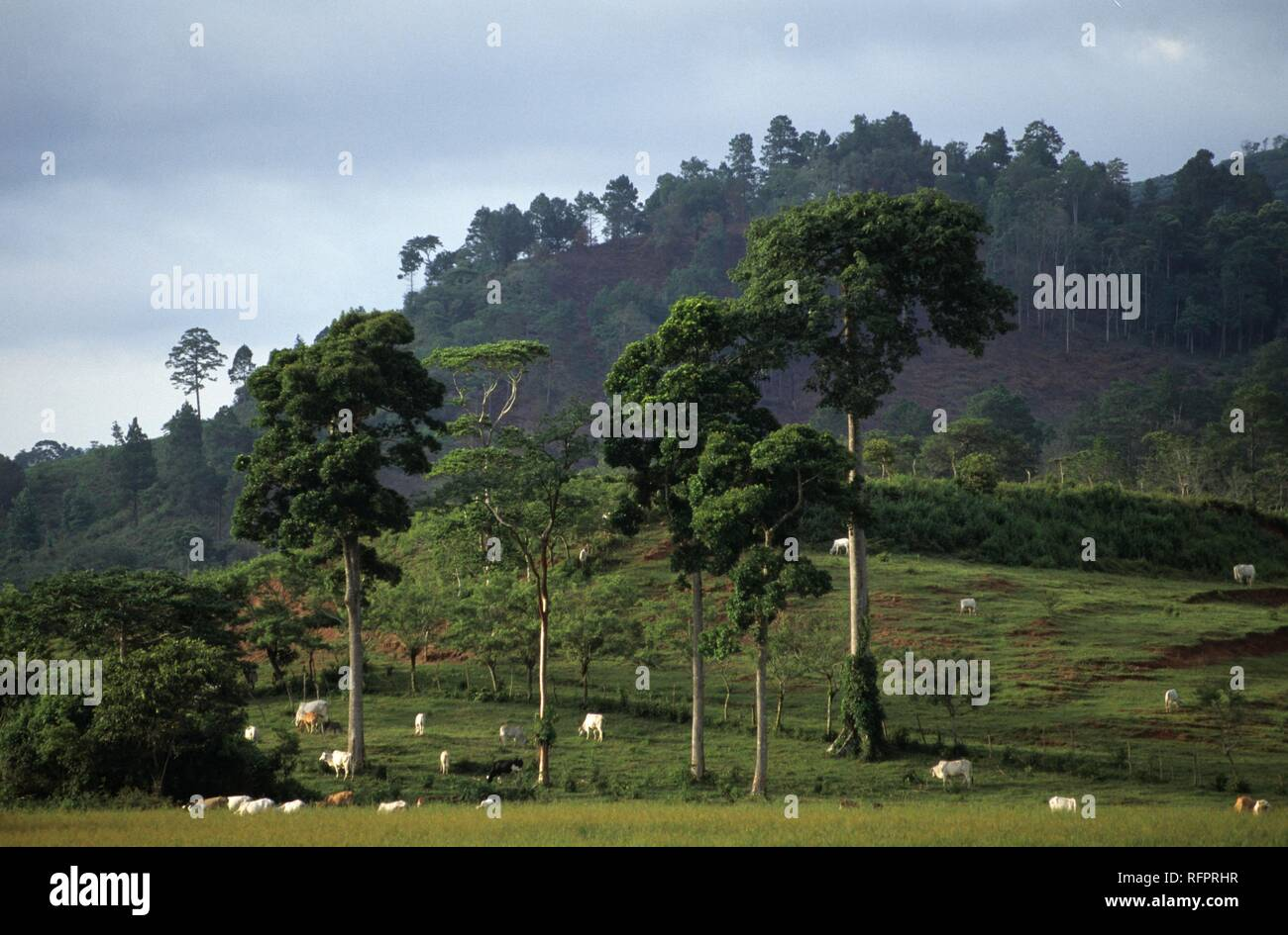 Pastureland near the road between La Entrada and Copan, Honduras - Stock Image