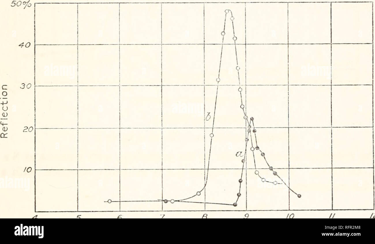 . Carnegie Institution of Washington publication. SULPHATES. 79 FERROUS SULPHATE (FeSC»4+7H2O). (Curve b, fig. 62.) This crystal dehydrated so rapidly that the surface became rough. There is one well-defined maximum at 9.1 /* which is harmonic with the SO4 band at 4.55 p. ALUM (K2S(XA12(SO4)8+24H2O). (Curve a, fig. 63.) Aschkinass (loc. cit.) found a small reflection band at 9.05^. The present examination was made to compare it with that of other com- pounds having the SO4 radical. The maximum was found at 9.1 /*.. 6 6 FIG. 63.—Alum (a); Anhydrite. IO 12/A ANHYDRITE (CaSO4). (Curve b, fig. 63. - Stock Image