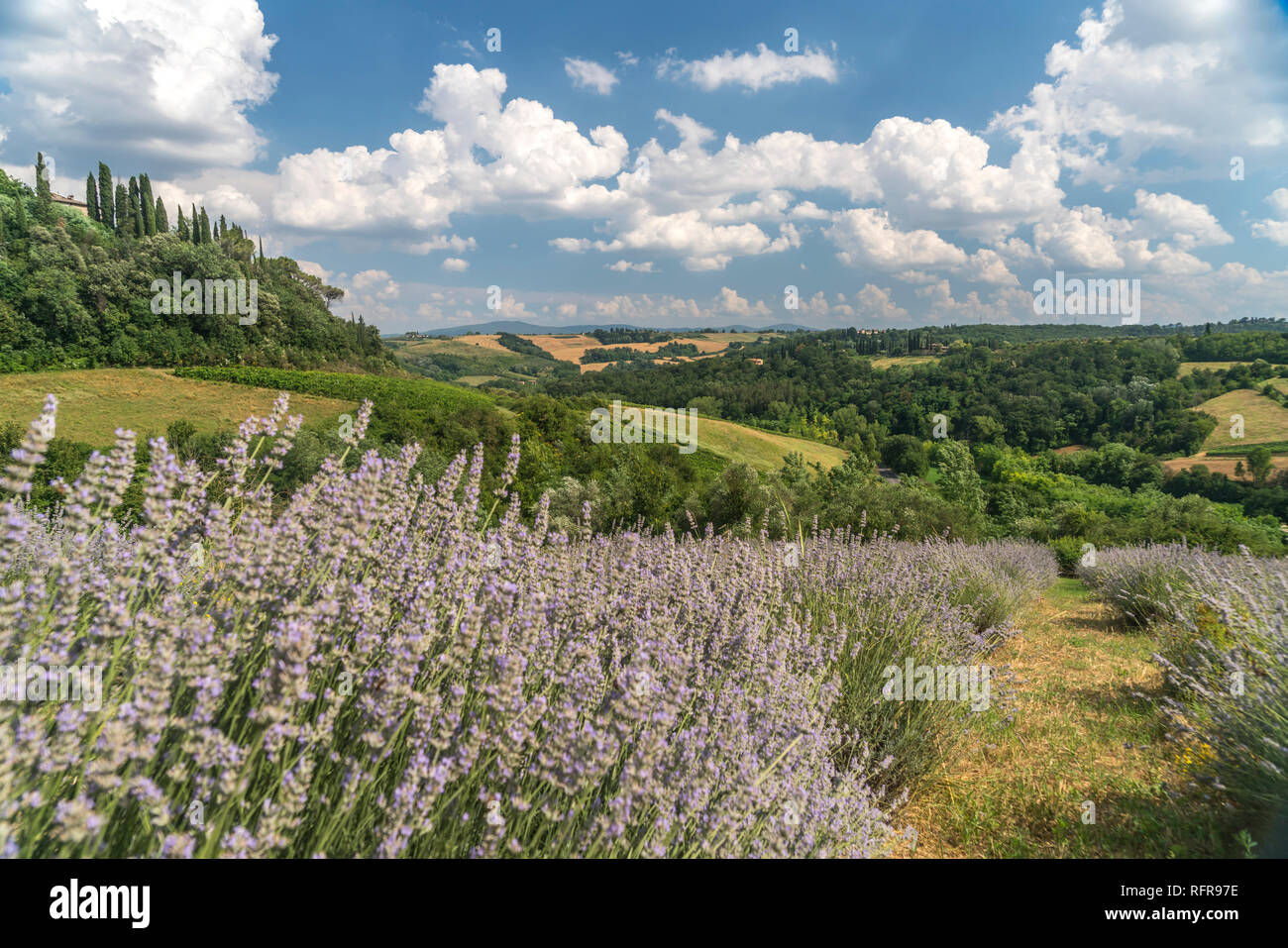 Typische toskanische Landschaft bei San Gimignano, Toskana, Italien  |   typical tuscan landscape around San Gimignano, Tuscany, Italy - Stock Image