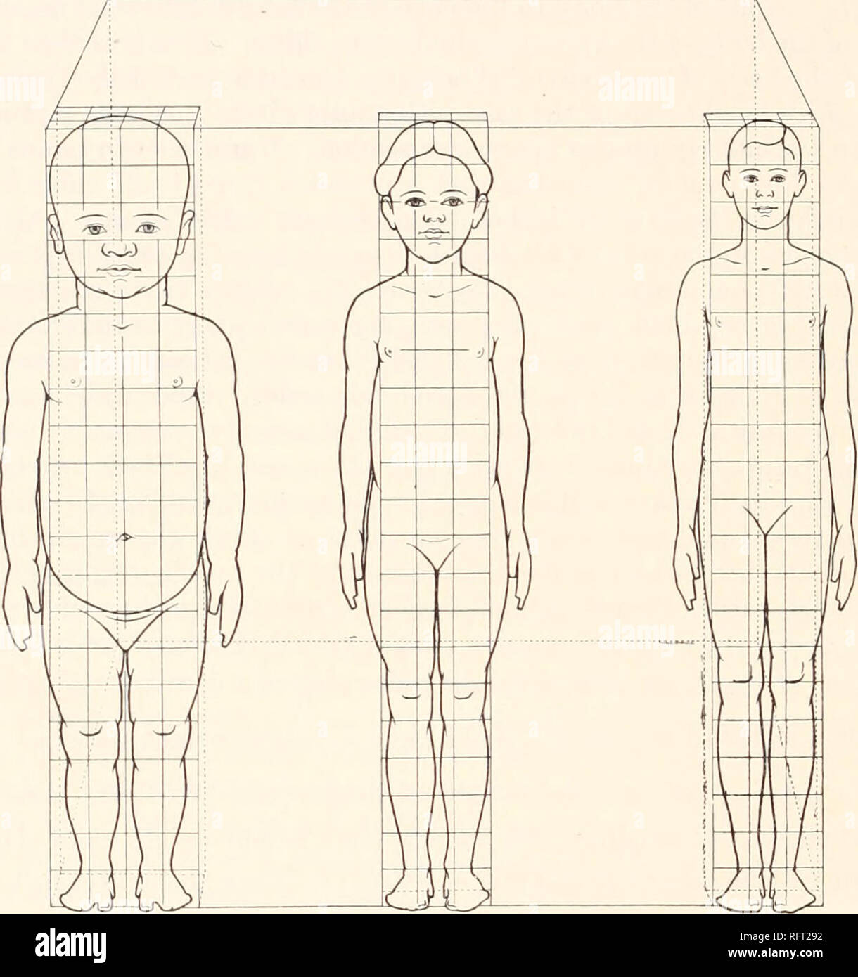 . Carnegie Institution of Washington publication. 490 HEIGHT AND WEIGHT IN RELATION TO BUILD imates 91.8 per cent of the thousandth part of the cube of the stature. In an adult male 68 inches tall it usually approximates 47.8 per cent at 30 to 35 years of age. We have used the inch-pound units because a large part of the best statistical studies on height and weight have been made in England and America with the use of these units. For the sake of uniformity in this article we have made use of the inch-pound height-weight index even when dealing with material expressed in metric system units.  - Stock Image