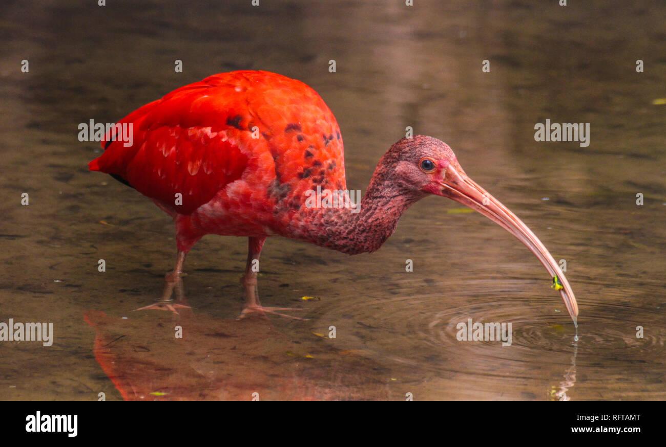 Beautiful bird at Parque das Aves, Foz do Iguazu, Brazil - Stock Image