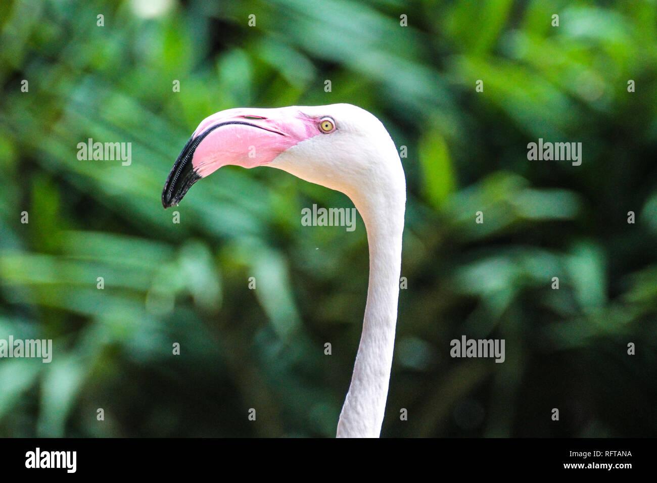 Rosa Flamingo - Stock Image