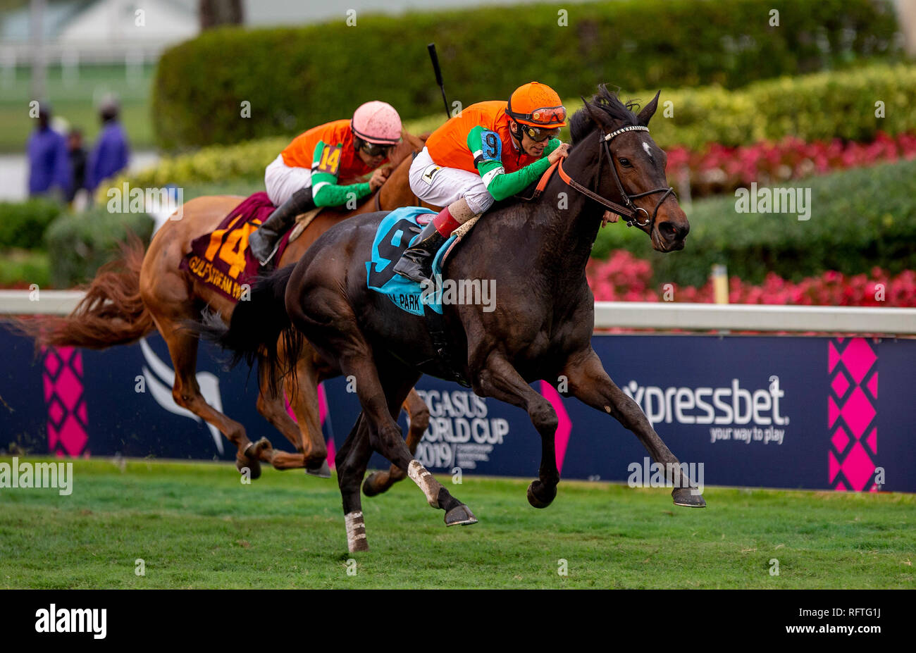 Florida, USA. 26th January 2019.Dolce Lili, #9, ridden by jockey John R. Velazquez, wins an undercard race at the Pegasus World Cup on January 26, 2019 at Gulfstream Park in Hallandale Beach, Florida. Kaz Ishida/Eclipse Sportswire/CSM/Alamy Live News - Stock Image