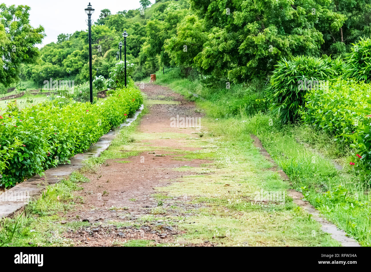Indian rural garden pathway with green bushes looking awesome. Stock Photo