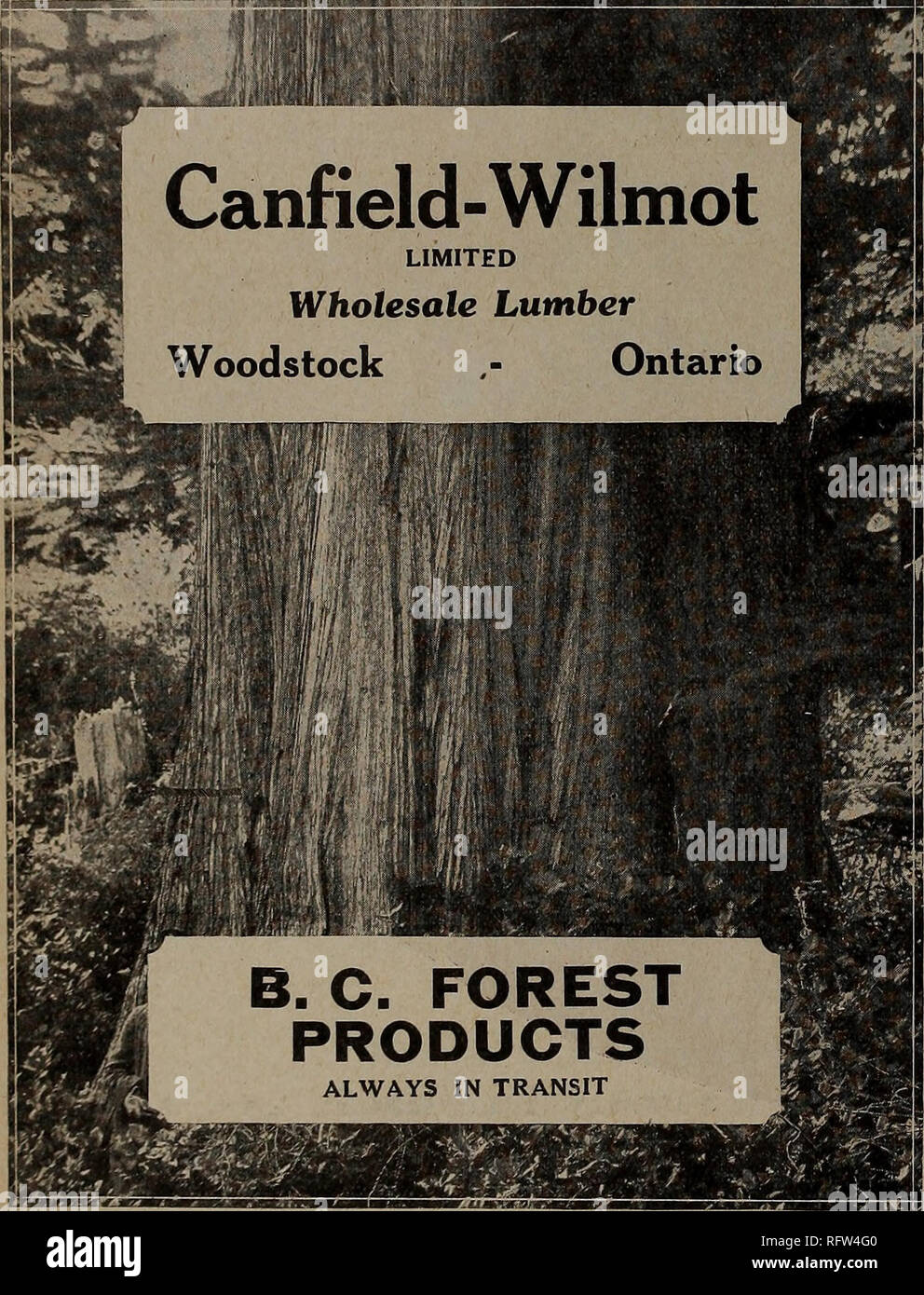 . Canadian forest industries July-December 1923. Lumbering; Forests and forestry; Forest products; Wood-pulp industry; Wood-using industries. CANADA LUMBERMAN International Land & Lumber Company Limited LUMBER AND RAILWAY TIES Limit, and Milk : ST. FELICIEN, LAKE ST. JOHN DISTRICT, QUEBEC. LOOK! All sizes No. 1 Hemlock, Dry Jack Pine Flooring & etc. ARTHUR N. DUDLEY Manufacturer and Wholesaler 108-109 Stair Building, TORONTO, ONT. TELEPHONE MAIN 6368 GET THE BEST IT WILL PAY YOU OLIVER White Pine and Hard- woods add a zip to sales and send your prestige stock soaring. Get quotations to - Stock Image