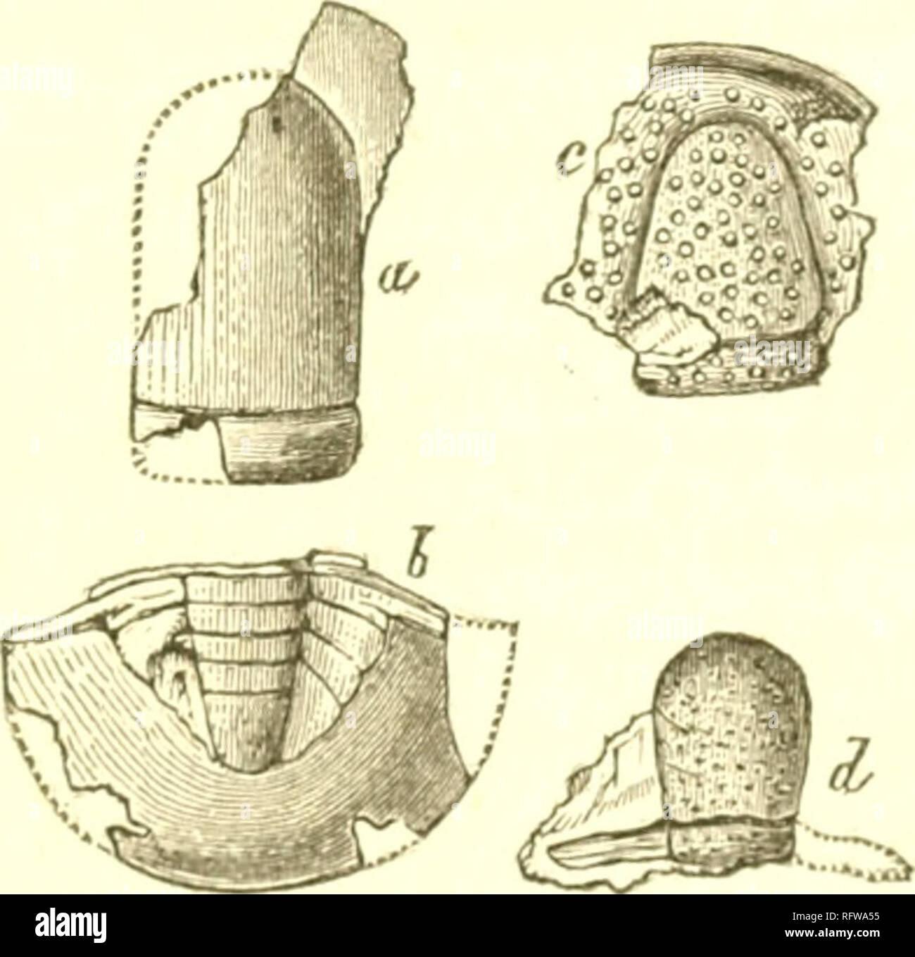 carbon dating bruges ofte til at bestemme en fossils alder