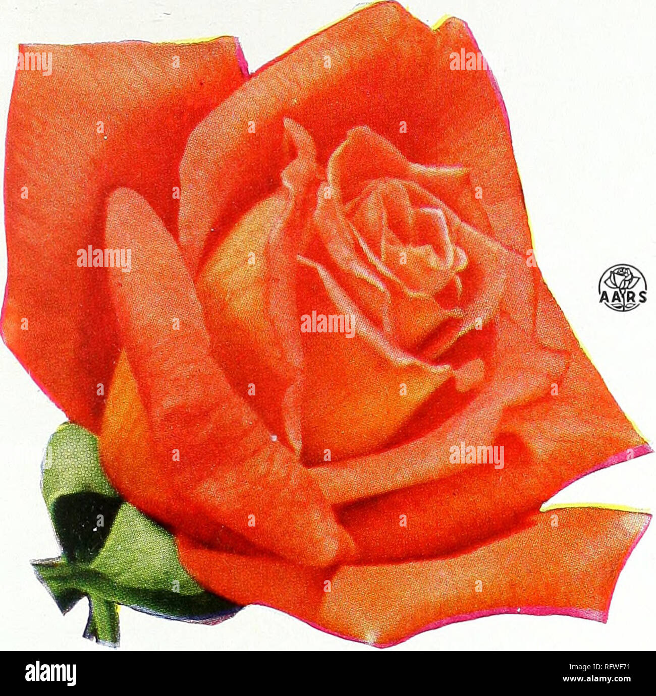 capitol city seeds for 1957 nurseries horticulture catalogs bulbs plants catalogs vegetables catalogs garden tools catalogs seeds catalogs 5 great roses for 1957 mojave h t plant patent 1176 2 75 each collection alamy