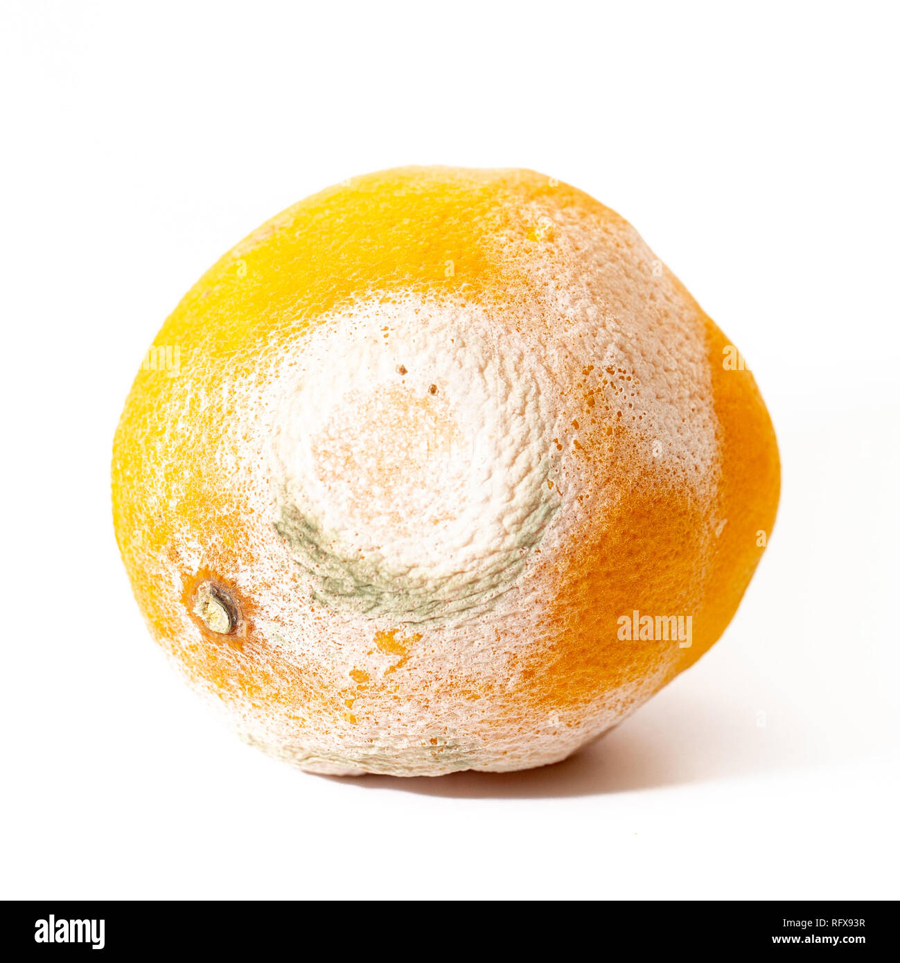 A spoiled orange with white and green mold, on a white  - Stock Image