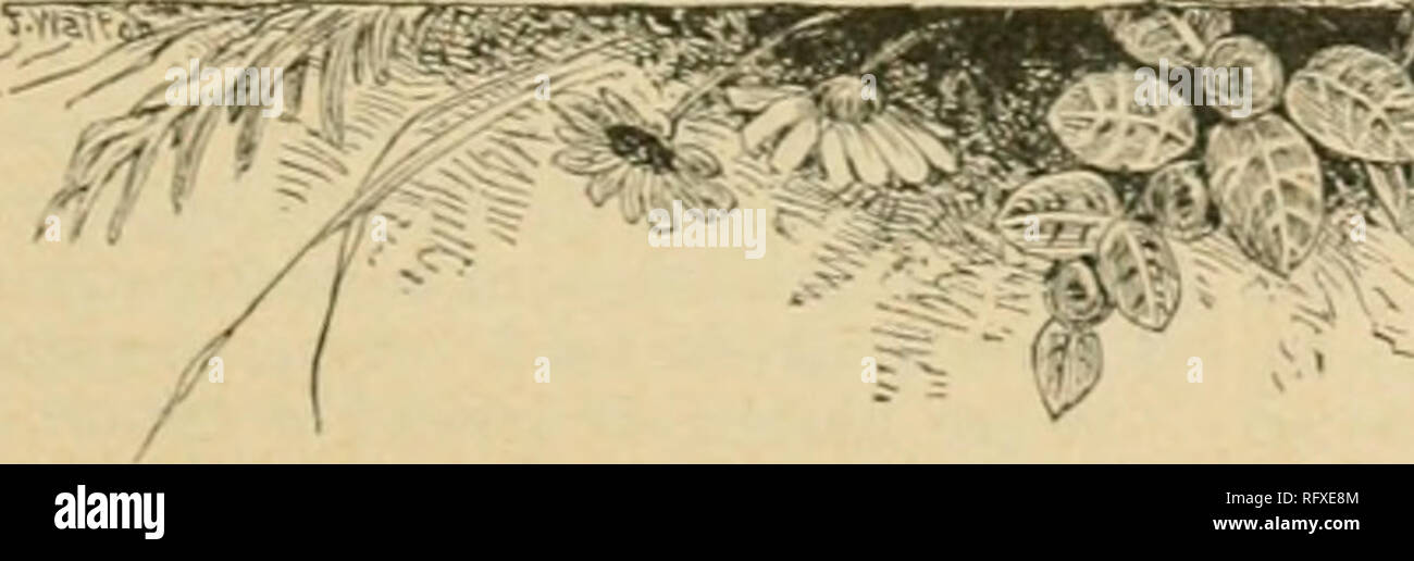 """. The Canadian horticulturist [monthly], 1897. Gardening; Canadian periodicals. As.to quantity and tillage. When you come to (Irimsby Village, Ask Woolverton, for he's the man who kno He doesn't deal in mystics But, he'll give you some statistics. About this charming """" Lady of the Snows."""" And if more you want, you'll get it Just enquire of A. H. Pettit, Who is posted on our record at the shows. Of the big Chicago Fair. And the laurels gathered there By this enterprising """" Lady of the Snows."""" In your land of boggy weather Vou have gardens in some measure Pears upon the wall, - Stock Image"""