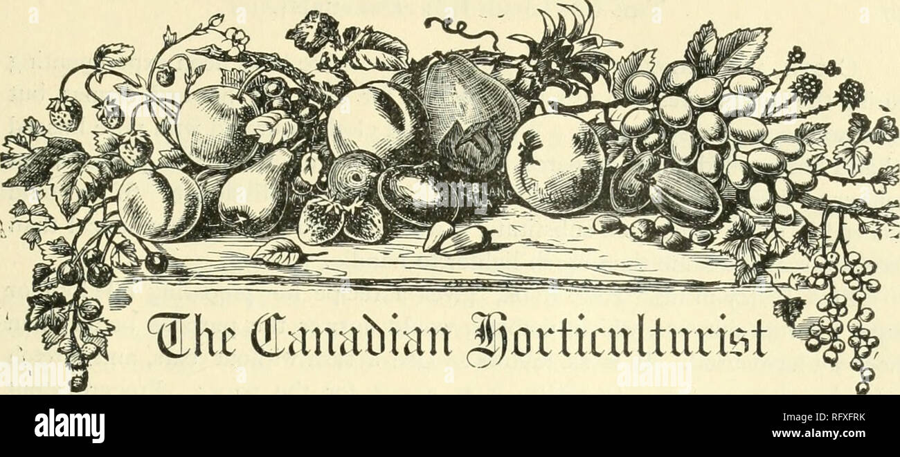 . The Canadian horticulturist [monthly], 1893. Gardening; Canadian periodicals. SUBSCRIPTION PRICE, $1 00 per year, entitl ng the subscriber to membership of the Fruit Growers' Association of Ontirio and all its privileges, including a copy of its valuable Annual Report, and a share in its annual distribution of plants and trees, REMITTANCES by Registered Letter are at our risk. Receipts will be acknowledged upon the address label. NOTES AND COMMENTS. Mr. E. Williams, of New Jersey, suggests an improvement in the naming of strawberries. He would give female names to the pistillate varieties, a - Stock Image