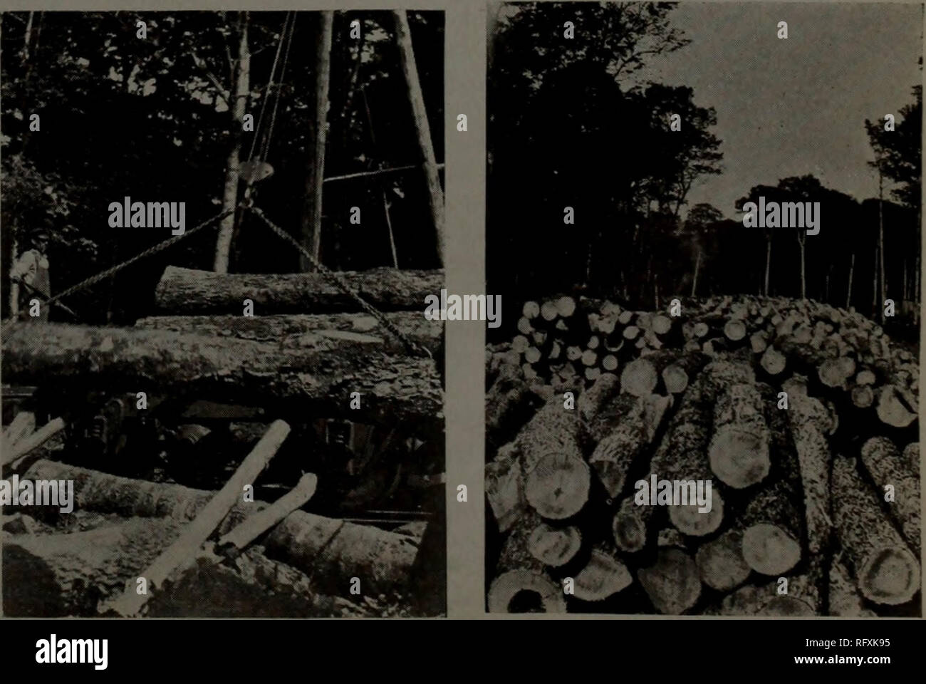 Canadian forest industries 1916  Lumbering
