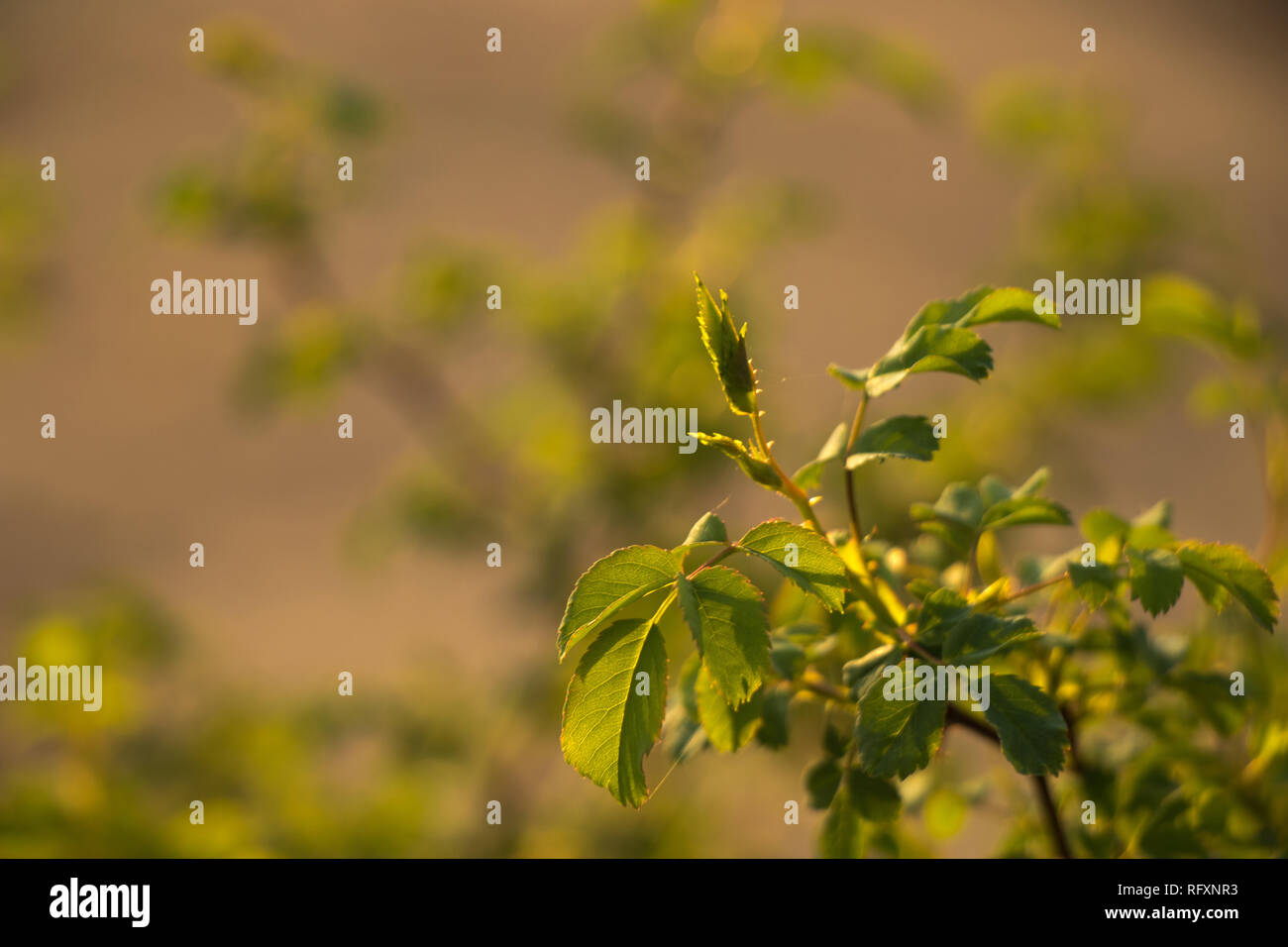 Green image of nettles close - Stock Image