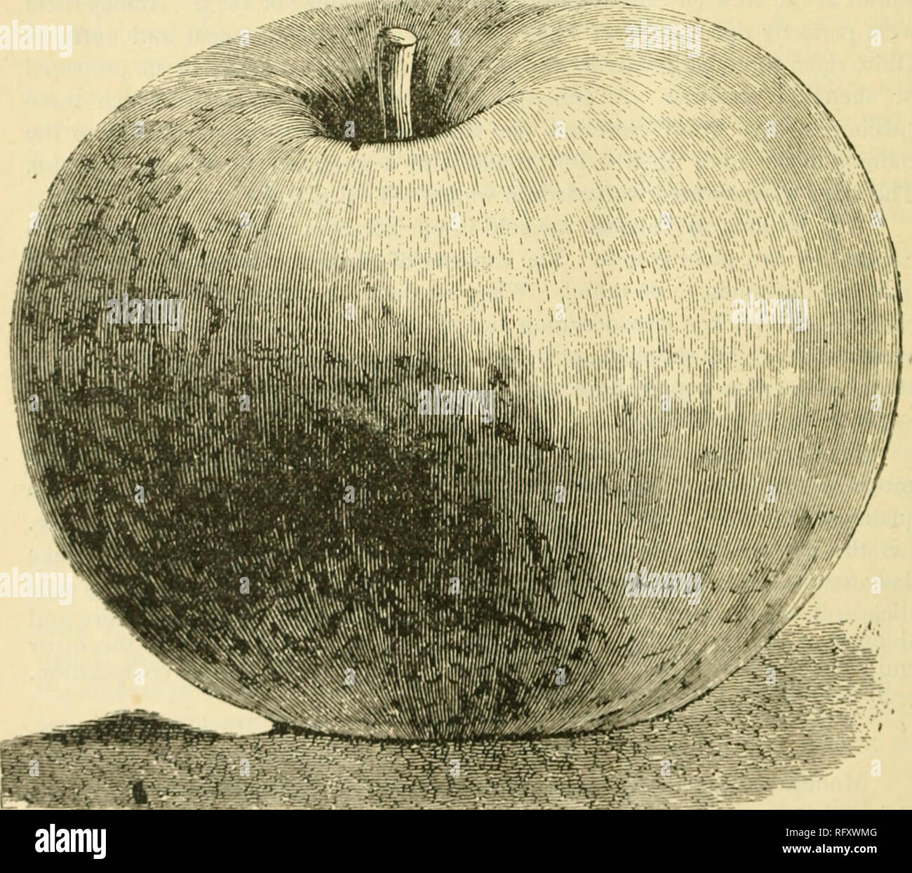 . The Canadian horticulturist [monthly], 1892. Gardening; Canadian periodicals. ^ jsf^U: arid Little Kqc)Loi) frbWs ^ FOREIGN FRUITS. ' Sir,—I send you by express two baskets containing six varieties of apples and nine varieties of pears. The pear narneil Wilinot was ))rouglit from Toronto to Newcastle about seventy years ago by the late Mr. VViliiiot and was named after him. Do you know what variety it is ? J. D. Kouerts, Cohounj, Ont. The interesting packages of fruit from our successful amateur fruit grower, Mr. J. D. Roberts, includes the following varieties. Pears:—Beurre Chaudry> Beur - Stock Image