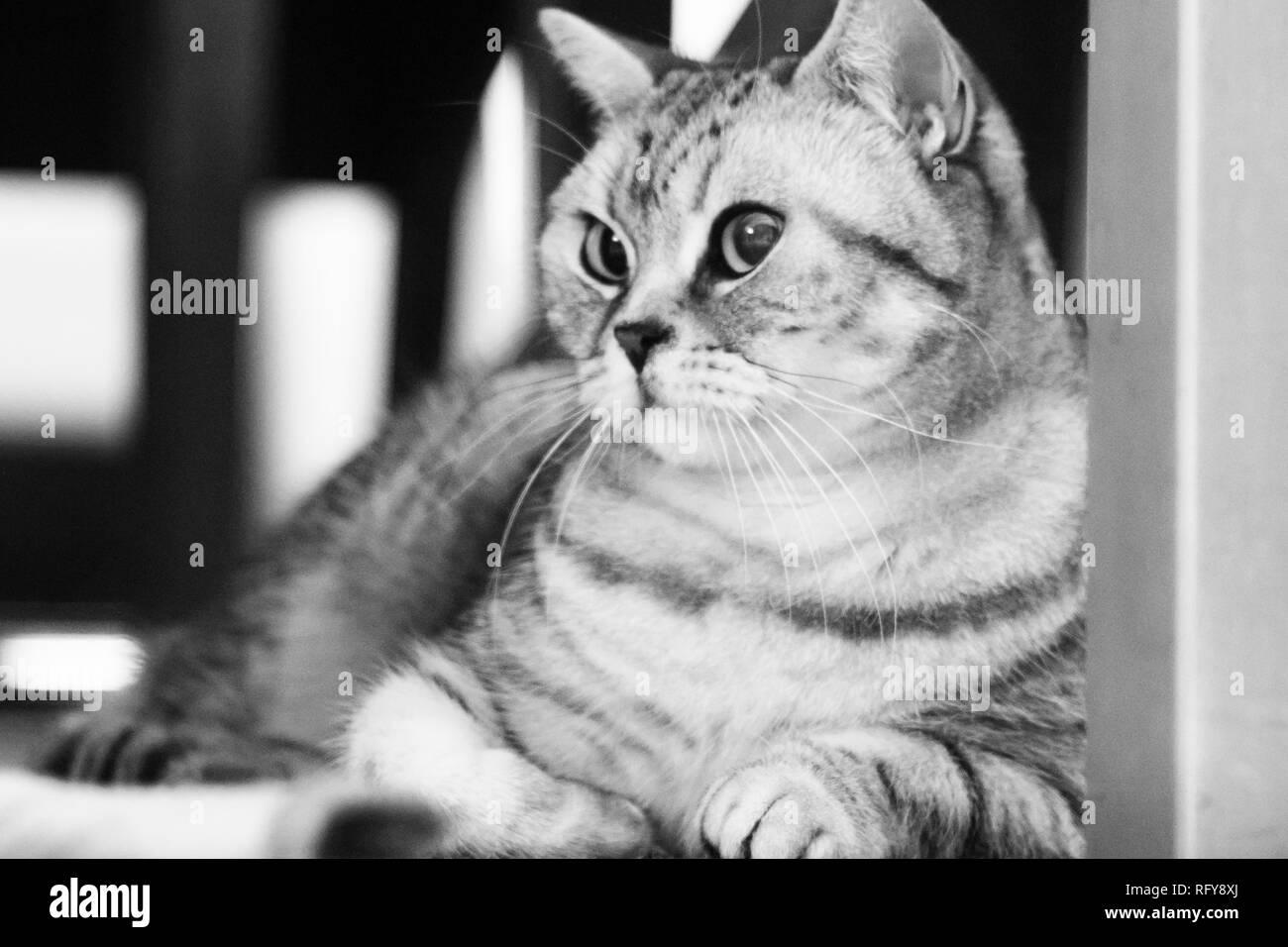 Katzen Portraits - Stock Image