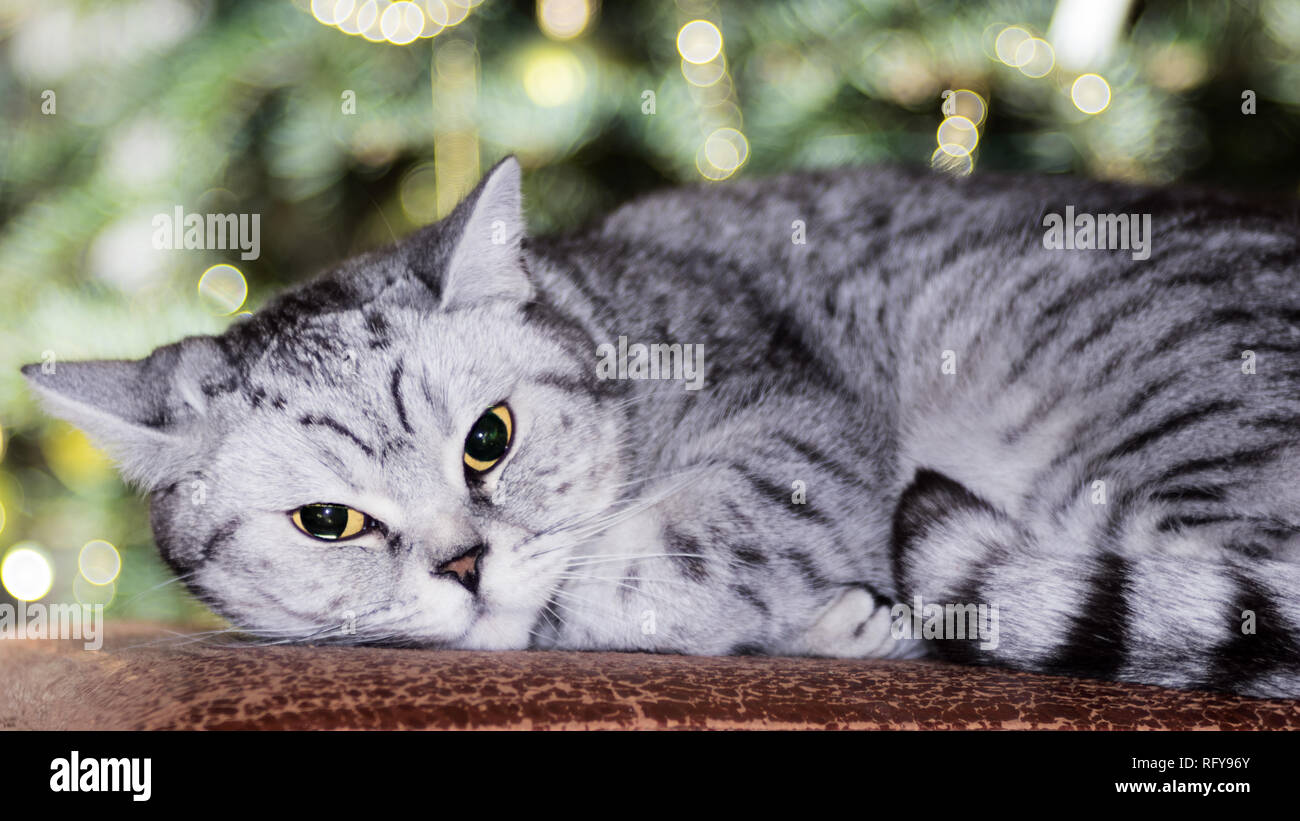 Katzen Portraits Stock Photo