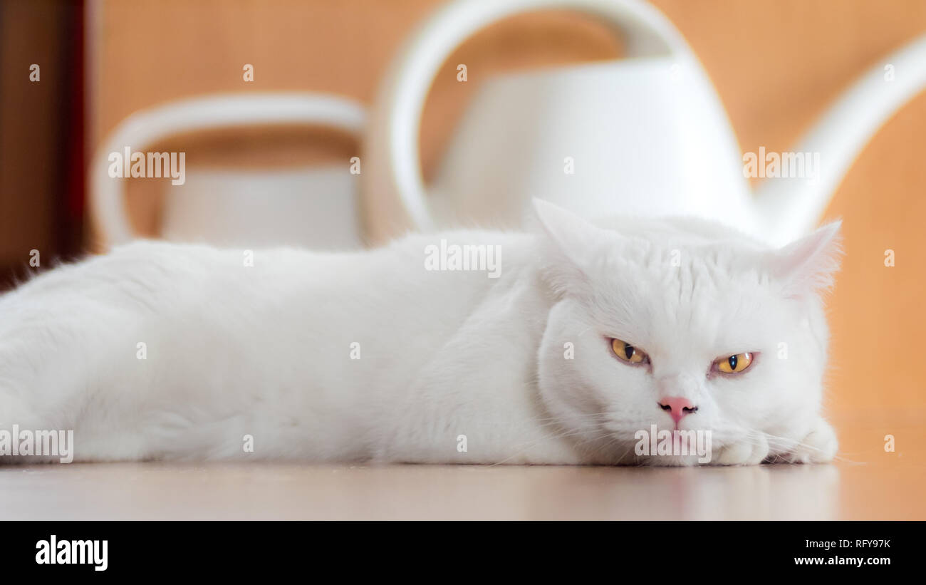 Katzen Portraits Stock Photo