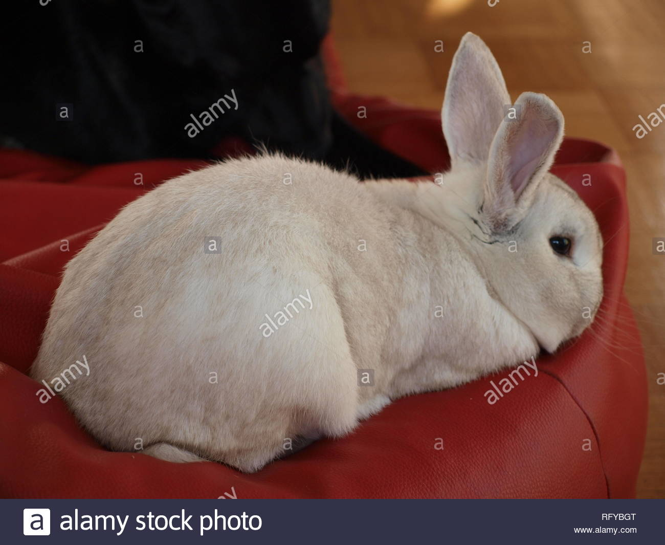 My dog has found the rabbit in the meadow - Stock Image