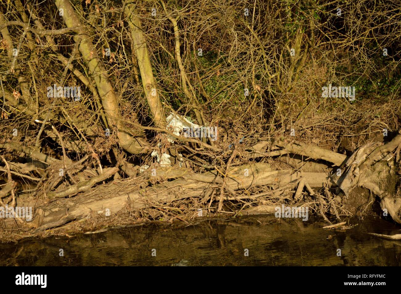 river mole, norbury park, surrey - Stock Image
