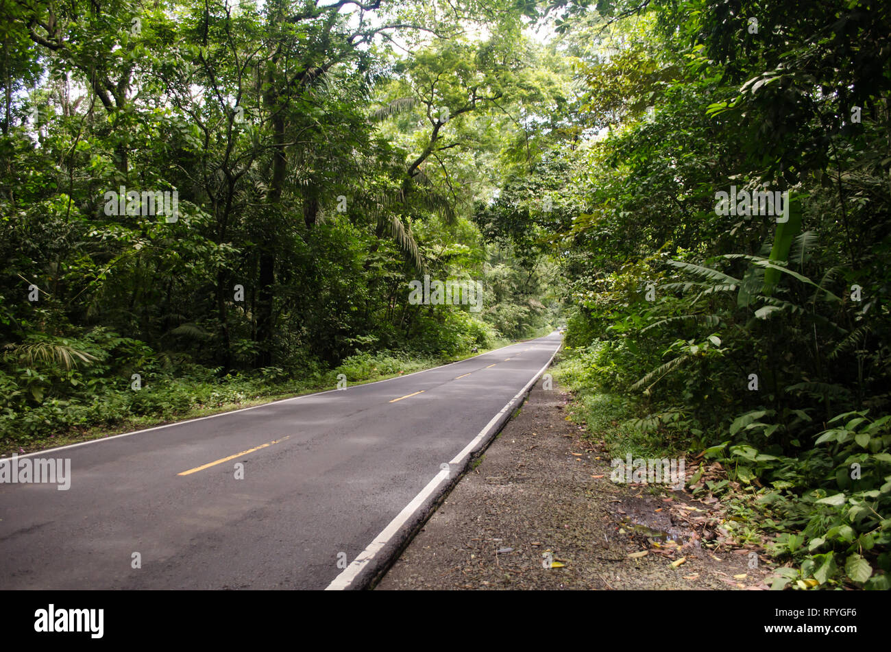 Madden Avenue also known as 'La Forestal' . It is a road in the middle of a protected forest in Panama. - Stock Image