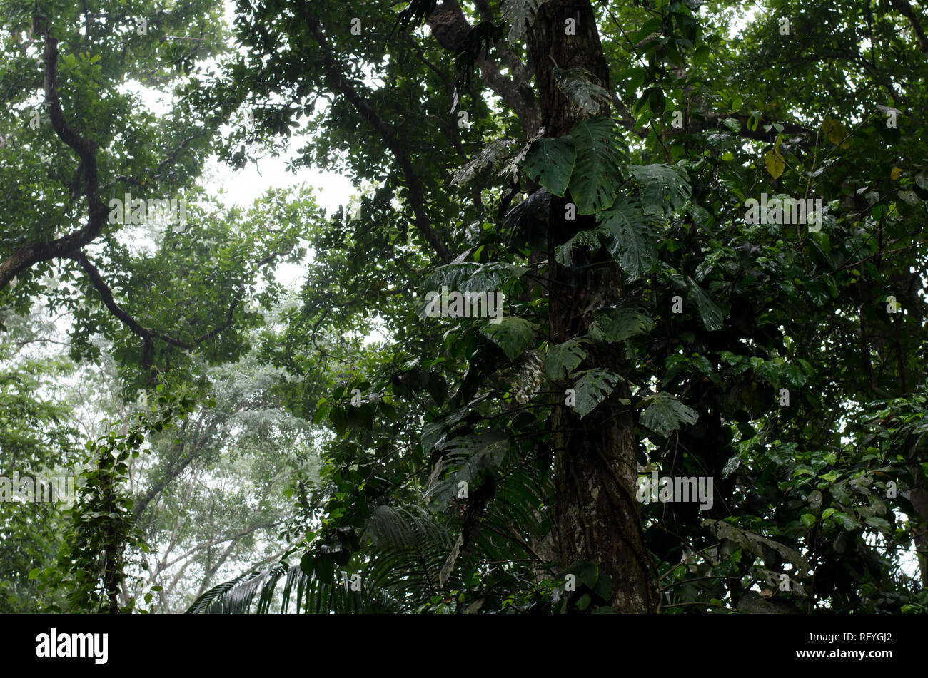 Soberania National Park forest canopy - Stock Image