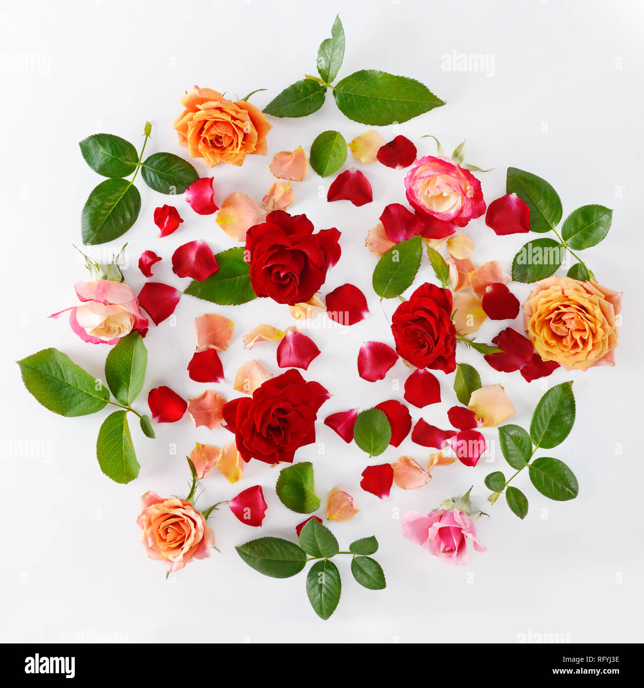 Pink and red roses isolated on white background. Flat lay, top view. Stock Photo