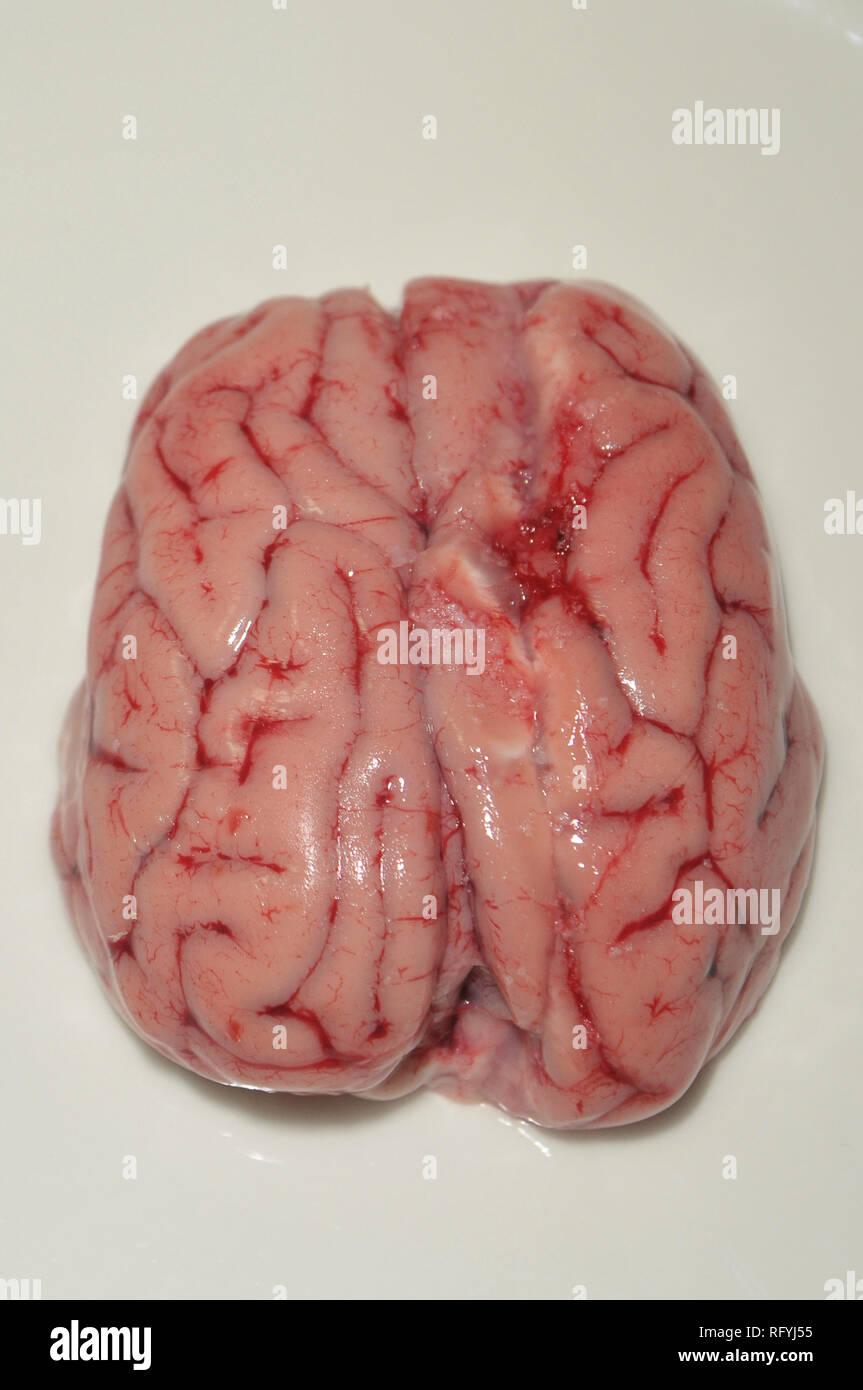 breaded lamb brain, plastering lamb brain, plastered lamb brain,  raw brain of lamb - Stock Image