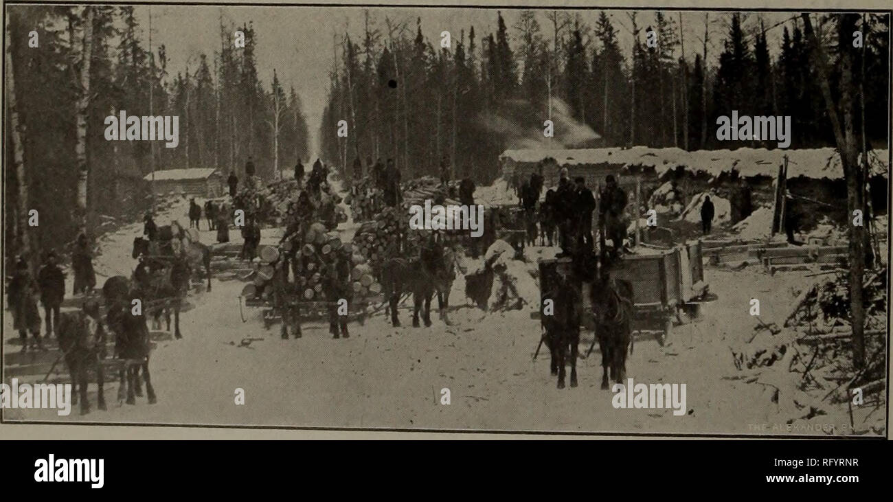 . Canadian forest industries 1901-1902. Lumbering; Forests and forestry; Forest products; Wood-pulp industry; Wood-using industries. PULP WOOD TflMflRflG C&DflR .... PORT ARTHUR, ONT. © © © © © © © 0 © © © © © © © © © © © © © © © © © © © © © © © © ©©©©©©©©©©©©©©«©©©©©©©©©©o©©©©©©©©©©^©©©©©©©©©©© »e©$© CACHE BAY LUMBER INDUSTRIES. Geo© Gordon & Go© MANUFACTURERS OF Red and White Pine LUMBER AND LATH BAND GANG CIRCULAR CACHE BAY, OINT., C. P. R., 26 miles West North Bay. cache Bay Pianino Mill Go. MANUFACTURERS OF Mouldings, Ceiling, Flooring, Wainscoting, Sheeting And all kinds of Dress - Stock Image