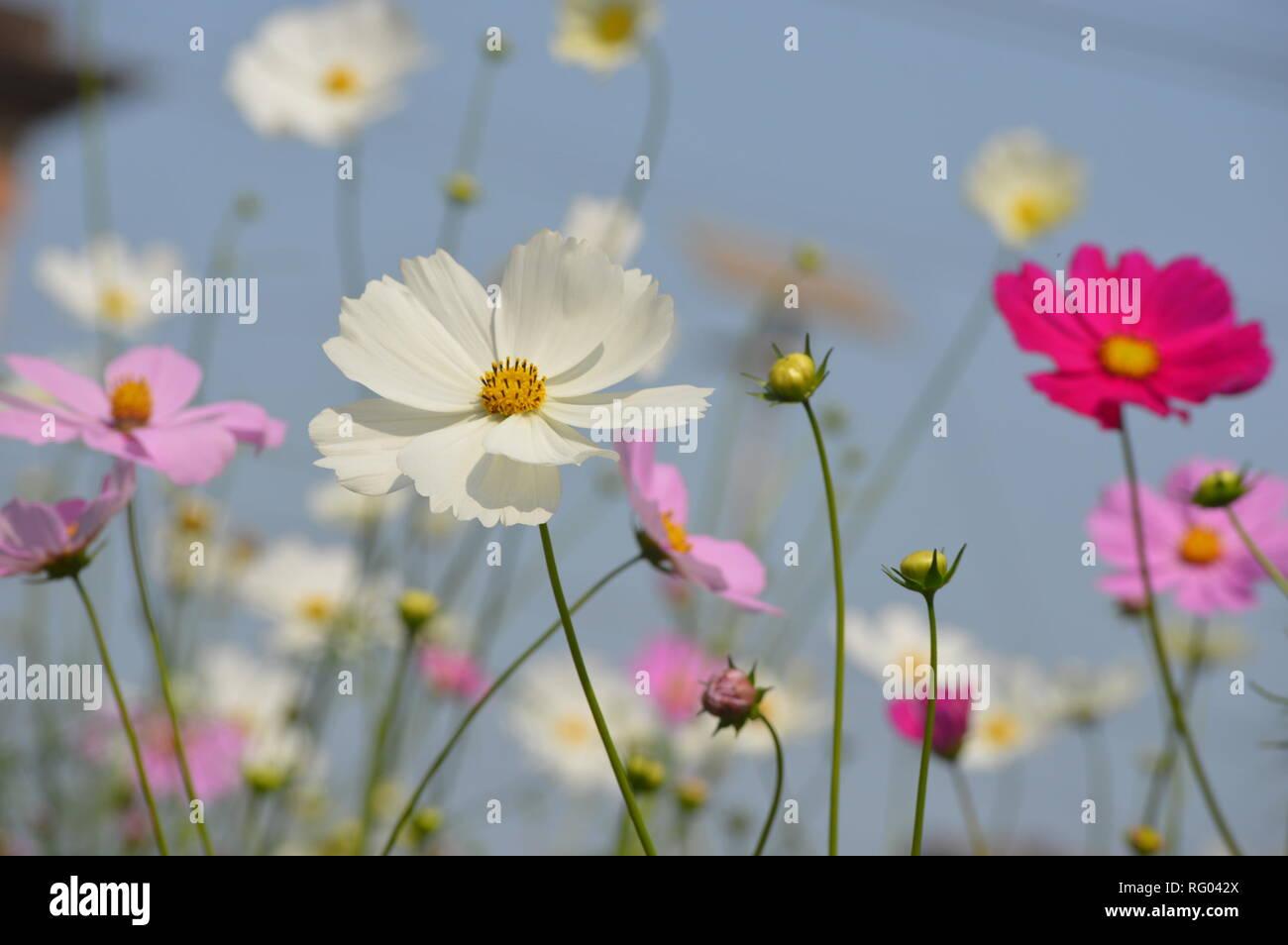 White flower in sunlight Stock Photo