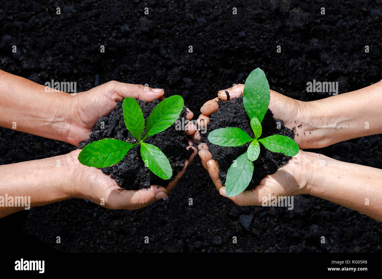 environment Earth Day In the hands of trees growing seedlings. Bokeh green Background Female hand holding tree on nature field grass Forest conservation Stock Photo