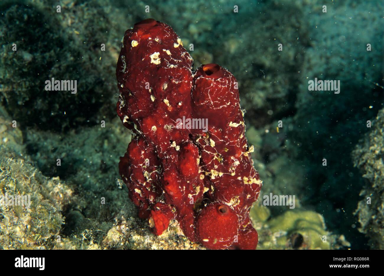 Marine, life, sea, life, ocean, plants, animals, organisms, salt, water, coastal, fundamental, level, nature, Shorelines, habitats, Oceans, living, sp - Stock Image