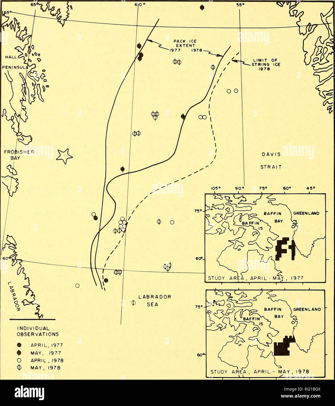 """. The Canadian field-naturalist. 186 The Canadian Field-Naturalist Vol. 94. INDIVIDUAL OBSERVATIONS • APRIL,1977 ^ MAY, 1977 O APRIL , 1978 MAY , 1978 90"""" 79° 60° 45° Figure 1. Observations of Snow Buntings in southern Davis Strait and jiorthern Labrador Sea during 295 PIROP watches in April and May 1977-1978. Large star shows 1979 drillship location. ing Davis Strait from Canada to West Greenland, judging by banding returns (Nethersole-Thompson 1966). Most observations were near the edge of extensive pack ice (Figure 1), where birds were often sighted resting on the ship or ice pans. The - Stock Image"""