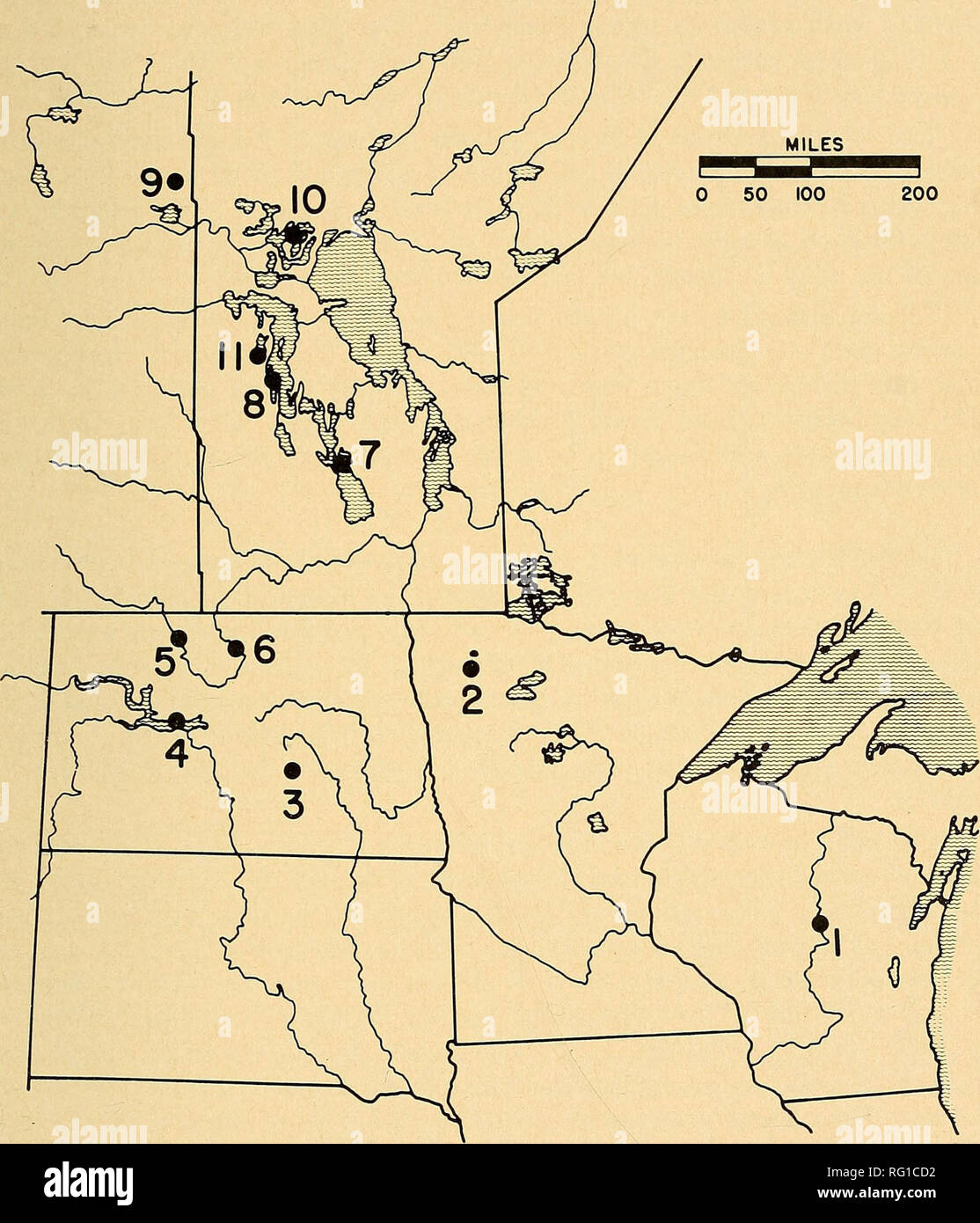 . The Canadian field-naturalist. 1969 Anderson et al.: Chlorinated Hydrocarbons in Birds 93. Figure 1. Map showing locations of pelican and cormorant breeding colonies used for pesticide studies in 1965. Locations are numbered as follows: 1. Lake DuBay, Wis.; 2. Agassiz National Wildlife Refuge (NWR), Minn.; 3. Chase Lake NWR, N.D.; 4. Lake Garrison, N.D.; 5. Upper Souris NWR, N.D.; 6. Salyer (formerly Lowter Souris) NWR, N.D.; 7. Dog Lake, Man.; 8. Lake Winnipegosis, Man.; 9. Suggi Lake, Sask.; 10. Moose Lake, Man.; 11. Pelican Lake, Man. Nesting pelicans were sampled at Chase Lake, Dog Lake, - Stock Image