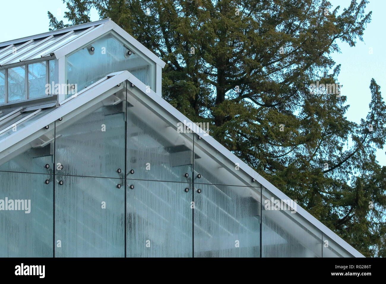 Botanic Gardens, Belfast, Northern Ireland.. 27 January 2019. UK weather - a cold day, 4-5C but feeling much colder in the strong north-westerly breeze. The recently renovated Tropical Ravine was the place to visit for warmth on the cold day. Credit: David Hunter/Alamy Live News. - Stock Image
