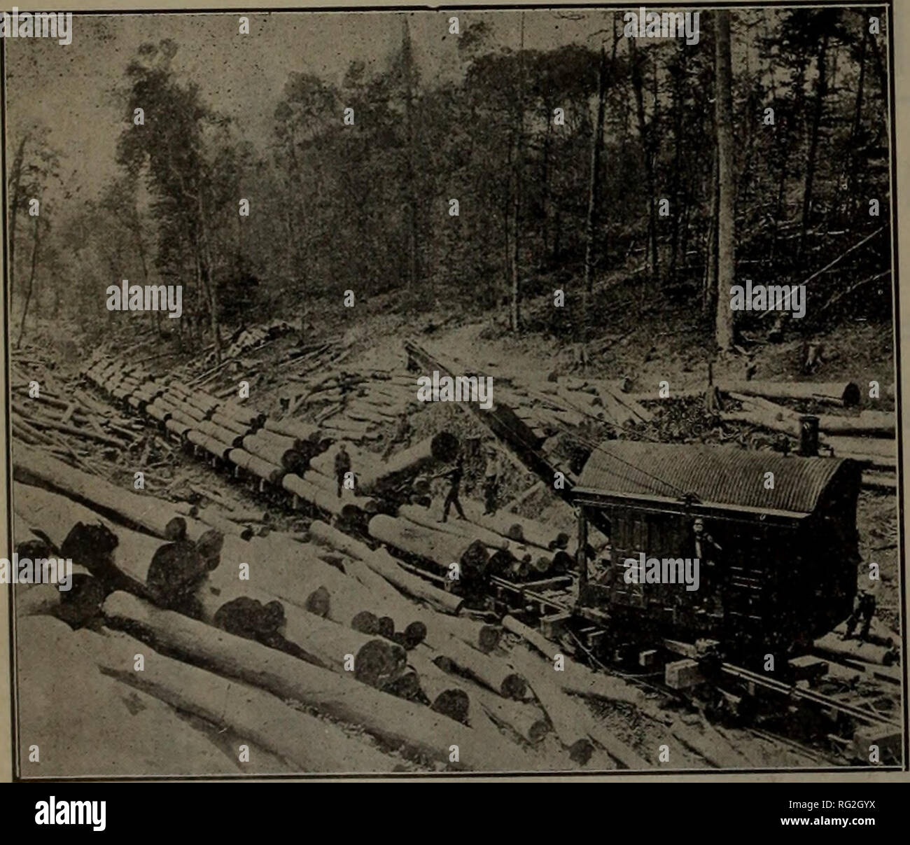 Canadian forest industries 1908  Lumbering