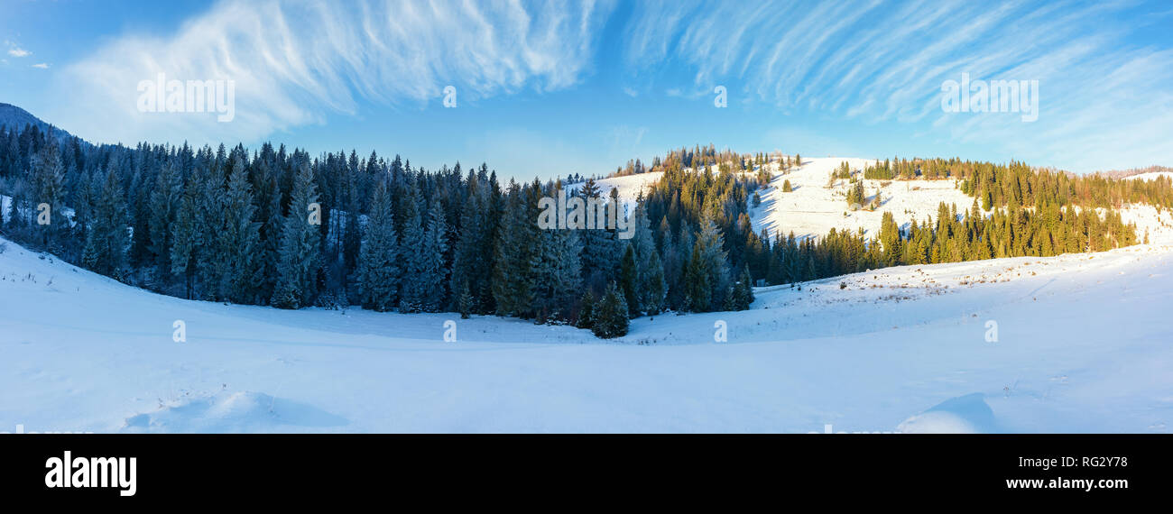 panorama of a beautiful winter landscape. spruce forest on a snow covered hills. part of trees in the shade. wonderful nature scenery in mountains - Stock Image