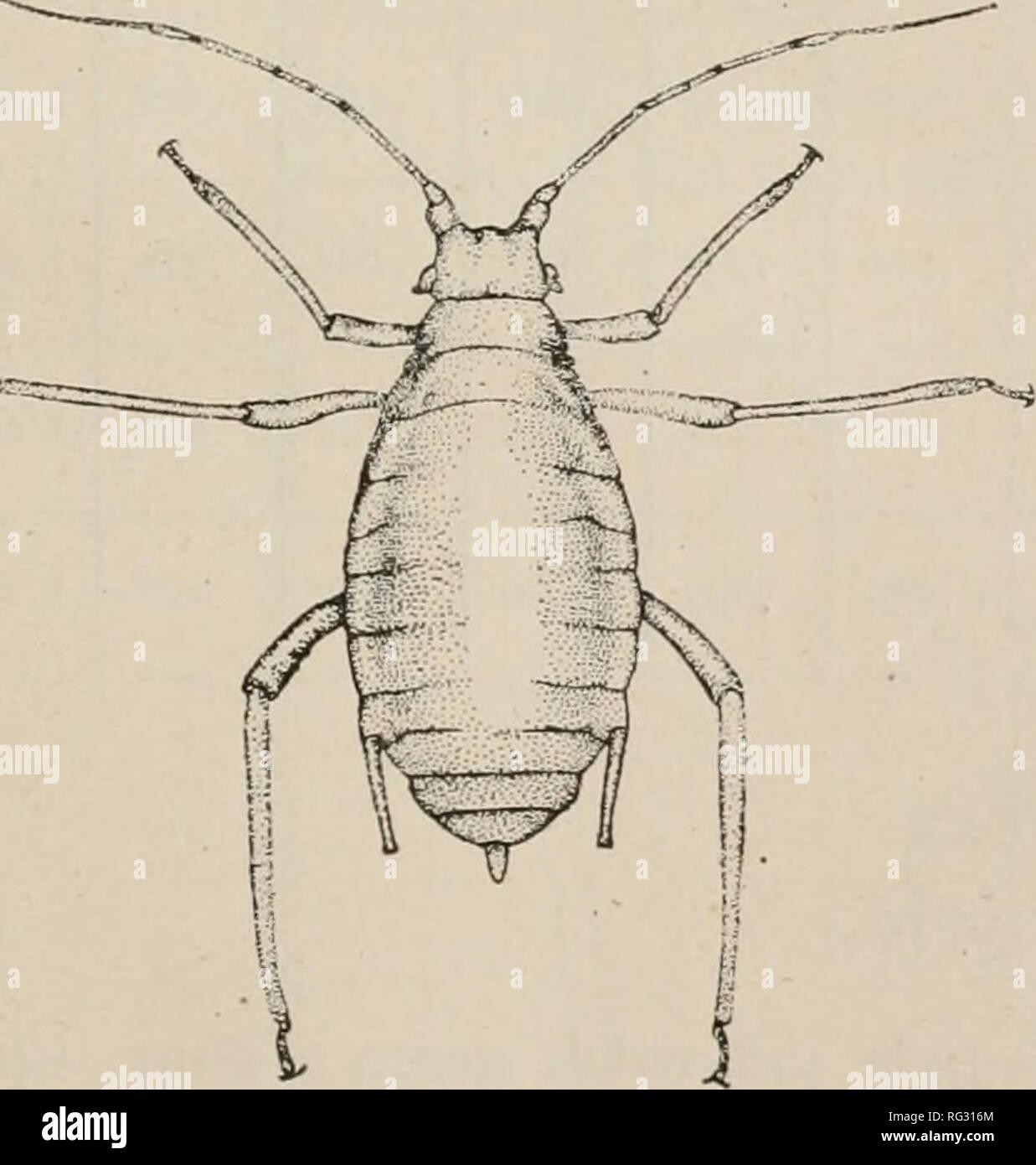 . The Canadian entomologist. Insects; Entomology. THE CANADIAN ENTOMOLOGIST 131 Locality, Date, Etc. I. II. III. IV. V. VI. (base) VI. (fila- ment) Total. La Fayette. Ind. (Idaho specimens) Wheat, Oct. 21, 1912 mm. .087 mm. .070 mm. .617 mm. .389 mm. .383 mm. .148 mm. .626 mm. 2.319 La Fayette, Ind. (Idaho specimens) Wheat, Nov. 1, 1912 .087 .070 .685 .459 .435 .174 .696 2.606 La Fayette, Ind. (Idaho specimens) Wheat, Nov. 1, 1912 .087 .070 .678 .452 .435 .156 .696 2. 574 La Fayette, Ind. (Idaho snecimens) Wheat. Nov. 1, 1912 .087 .070 .643 .383 .400 .156 . 635 2.374 La Fayette. Ind. (Idaho sp - Stock Image