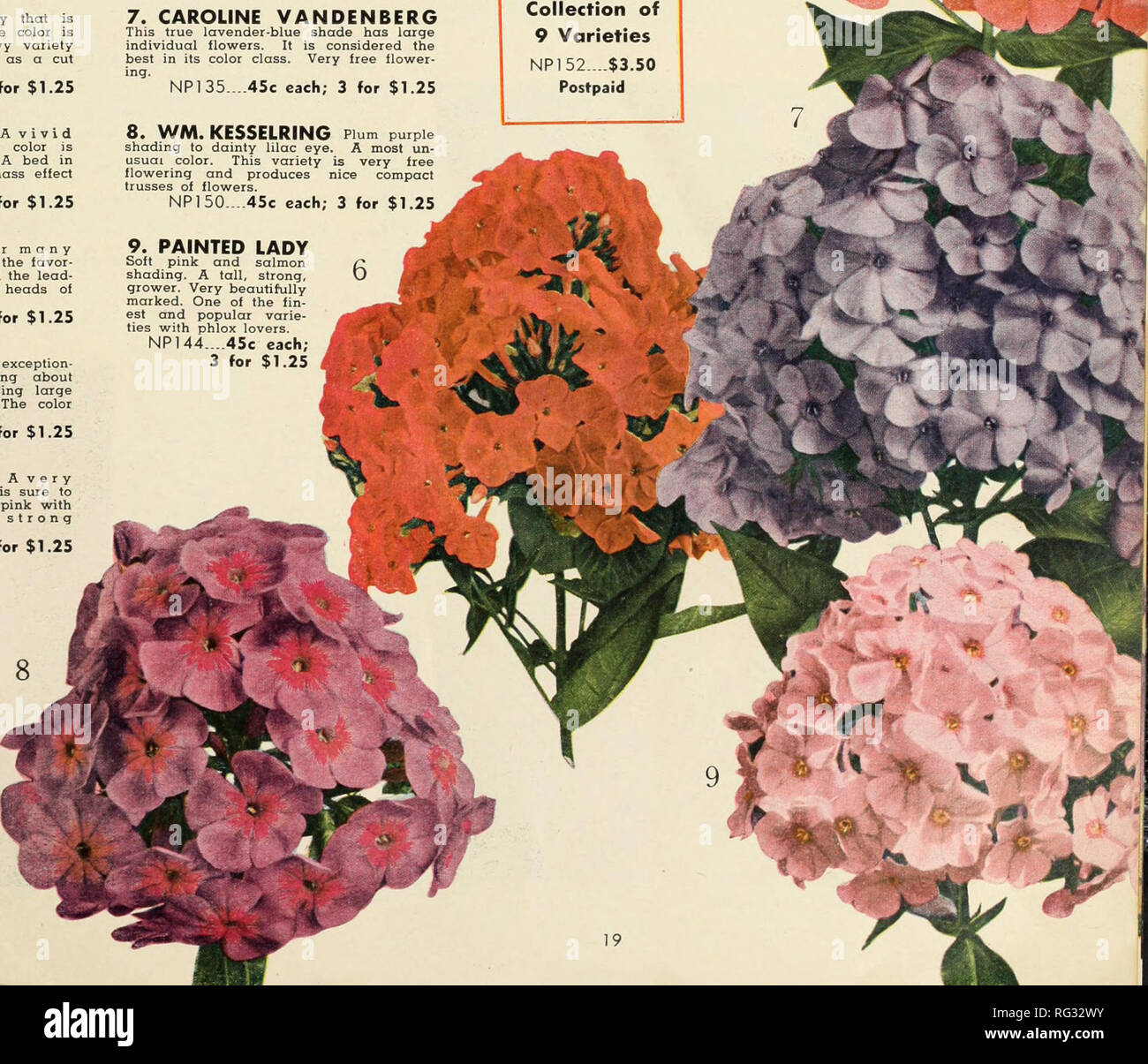 . California sets the fashion. Nurseries (Horticulture) Catalogs; Flowers Seeds Catalogs; Roses Catalogs; Plants, Ornamental Catalogs. NP 144....45c each; 3 for $1.25. Please note that these images are extracted from scanned page images that may have been digitally enhanced for readability - coloration and appearance of these illustrations may not perfectly resemble the original work.. Germain Seed and Plant Company; Henry G. Gilbert Nursery and Seed Trade Catalog Collection. Los Angeles, Calif. : Germain - Stock Image