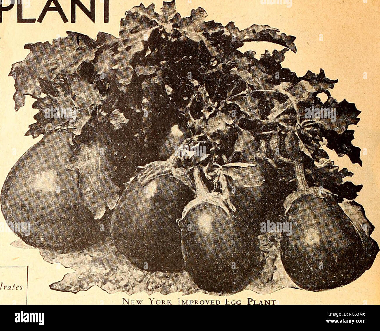 . California gardening. Nurseries (Horticulture) Catalogs; Flowers Seeds Catalogs; Plants, Ornamental Catalogs; Vegetables Seeds Catalogs; Fruit trees Catalogs; Trees Catalogs; Grasses Seeds Catalogs. GERMAIN'S EGG PLANT Aubergine, Fr. Bereiijena, Sp. Petonciano, Ital. Eierfrucht, Ger. Note—Prices listed are postpaid CULTURE The plants should be started under glass if ^ wanted early. If later results are desired, seed should be planted in cold frames or , in boxes where special care can be given. Egg plant seed is very delicate and will not grow unless special care is given it. It is easily af Stock Photo