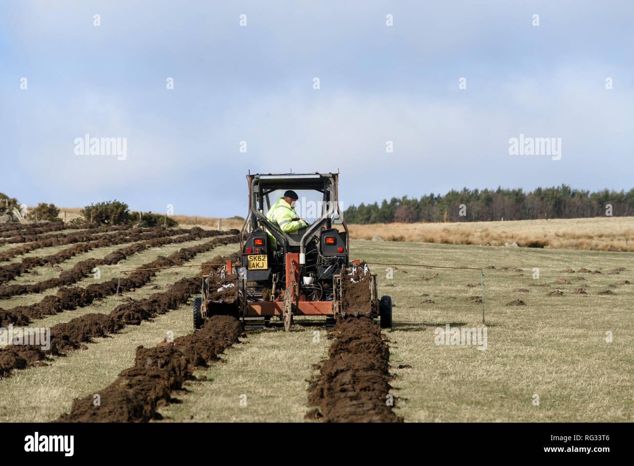 Friday 23rd of March 2018:  The first trees being planted in England's largest forest for more than 30 years at Doddington North Moor - Stock Image
