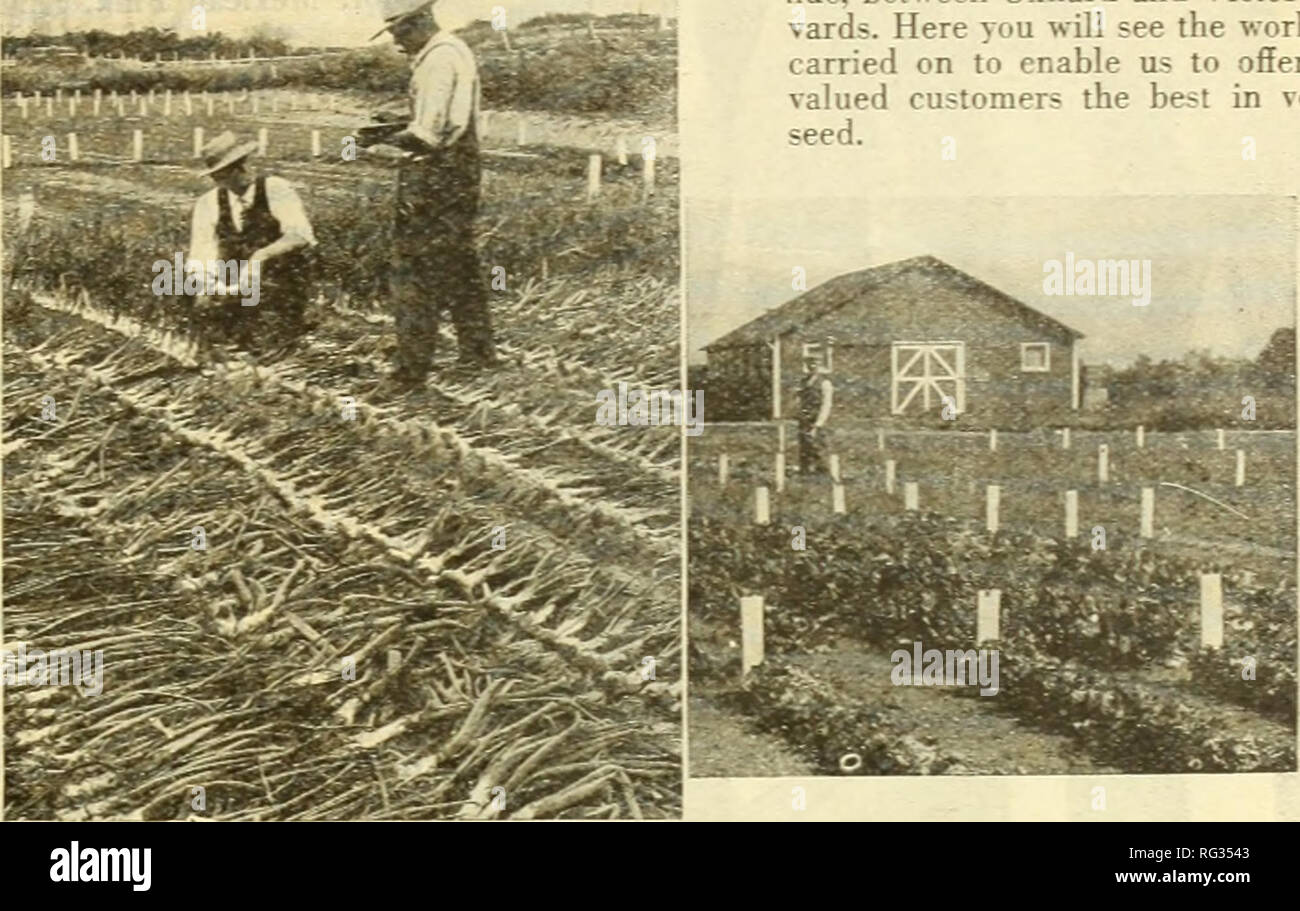 . California gardening. Nurseries (Horticulture) Catalogs; Flowers Seeds Catalogs; Plants, Ornamental Catalogs; Vegetables Seeds Catalogs; Trees Catalogs; Grasses Seeds Catalogs; Gardening Equipment and supplies Catalogs. Germain's Premium Quality Vegetable Seed Since 1871 we have catered to the critical market garden trade. We have at all times only offered such varieties as were best adapted to the Great Southwest. The following listing is composed of those varieties of vegetable seed that we consider the best for the market or home garden. A great deal of experimenting and testing was neces Stock Photo