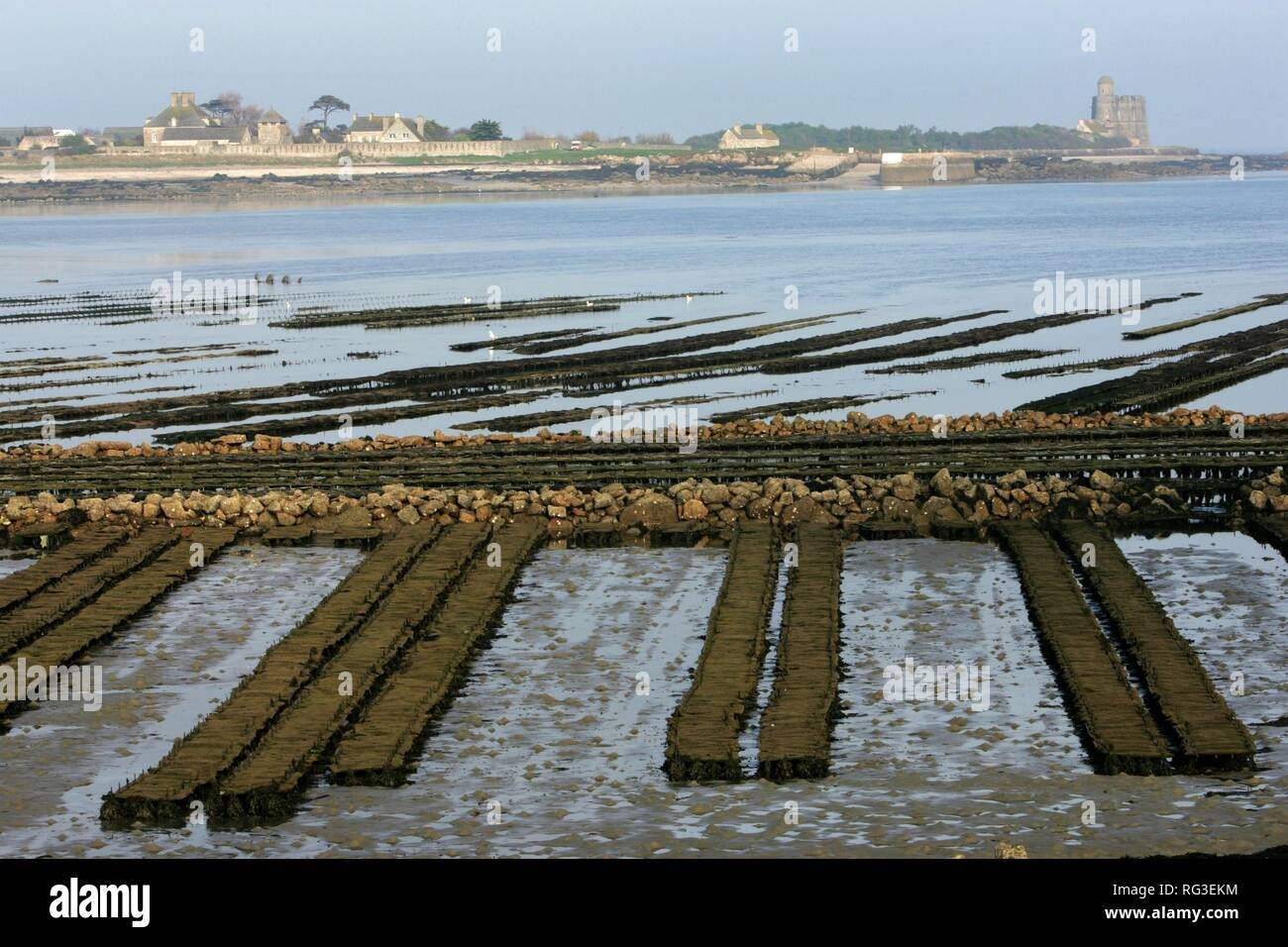 FRA, France, Normandy: Oyster farm of St. Vaast la Hougue. Behind, the island of Tatihou Stock Photo