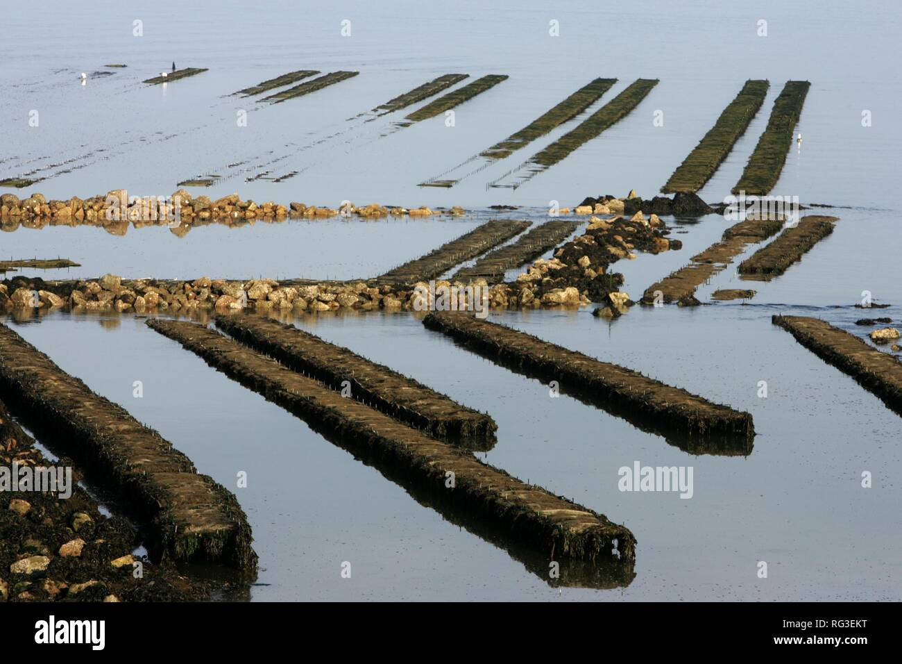 FRA, France, Normandy: Oyster farm of St. Vaast la Hougue. Stock Photo