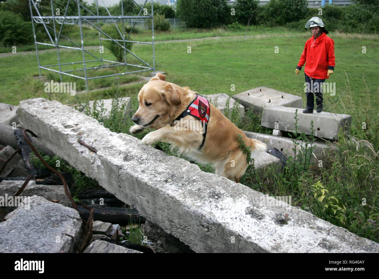 DEU, Federal Republic of Germany, Duisburg: Rescue dogs of the fire service. The searchdogs can find person under a collapst - Stock Image