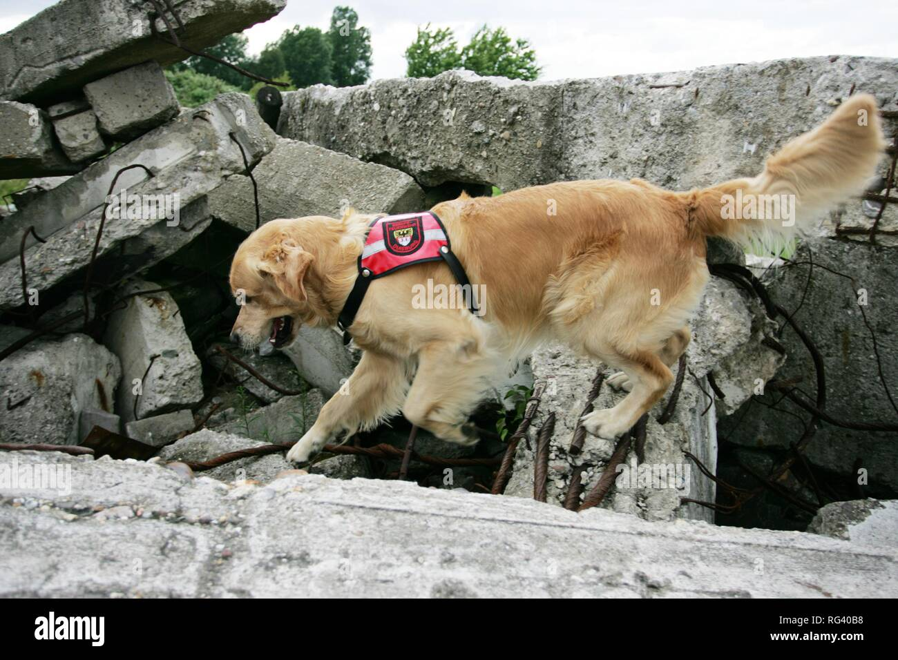 DEU, Federal Republic of Germany, Duisburg: Rescue dogs of the fire service. The searchdogs can find person under a collapst Stock Photo